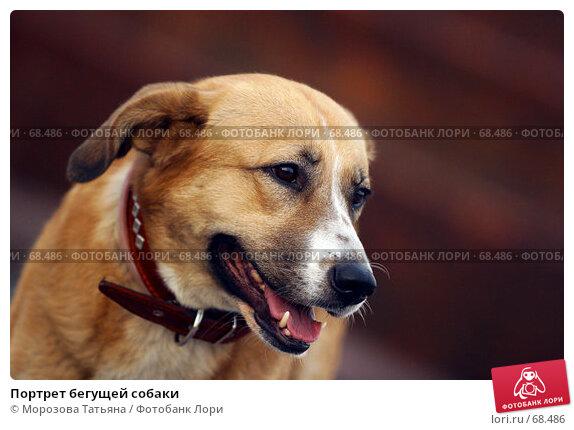 Портрет бегущей собаки, фото № 68486, снято 17 июля 2005 г. (c) Морозова Татьяна / Фотобанк Лори