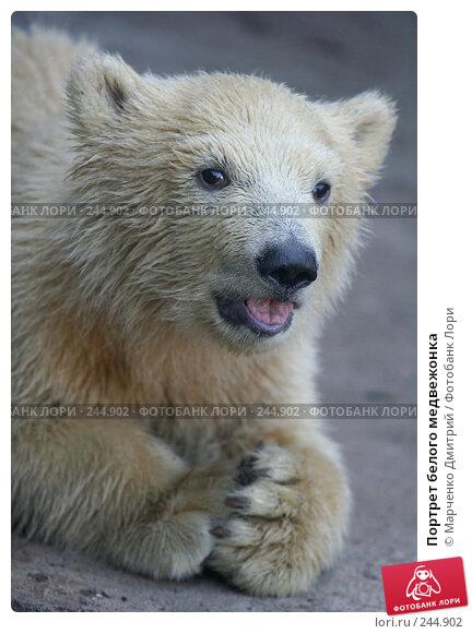 Портрет белого медвежонка, фото № 244902, снято 22 марта 2008 г. (c) Марченко Дмитрий / Фотобанк Лори