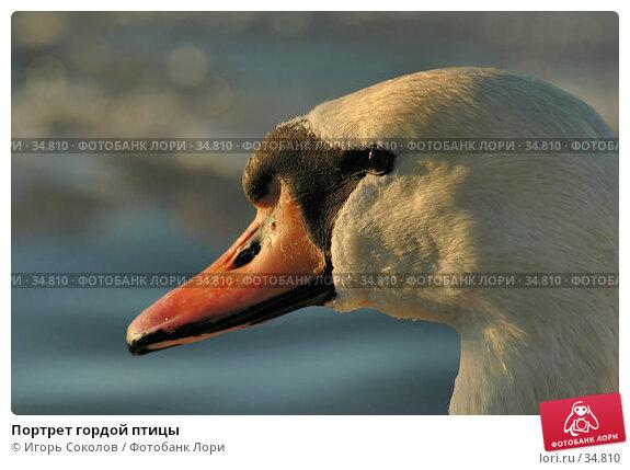 Портрет гордой птицы, фото № 34810, снято 27 октября 2016 г. (c) Игорь Соколов / Фотобанк Лори