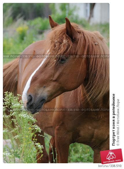 Портрет коня в репейнике, эксклюзивное фото № 338510, снято 23 июня 2008 г. (c) Free Wind / Фотобанк Лори
