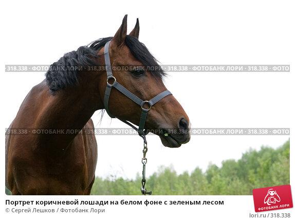 Портрет коричневой лошади на белом фоне с зеленым лесом, фото № 318338, снято 18 мая 2008 г. (c) Сергей Лешков / Фотобанк Лори