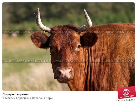 Портрет коровы, фото № 144622, снято 18 сентября 2006 г. (c) Максим Горпенюк / Фотобанк Лори