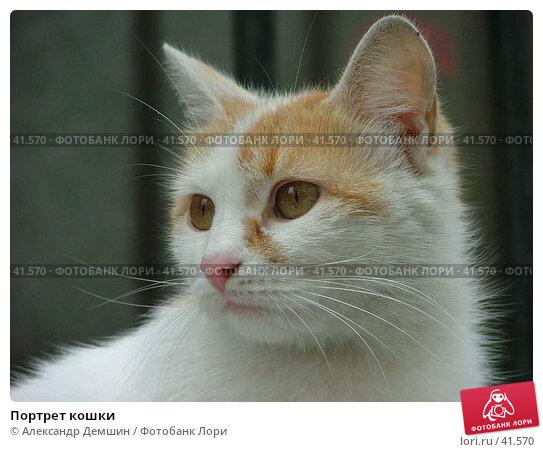 Портрет кошки, фото № 41570, снято 29 июня 2004 г. (c) Александр Демшин / Фотобанк Лори
