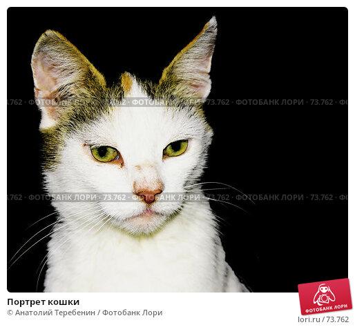 Портрет кошки, фото № 73762, снято 27 июля 2007 г. (c) Анатолий Теребенин / Фотобанк Лори