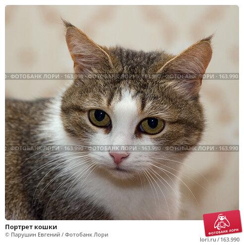 Портрет кошки, фото № 163990, снято 19 января 2017 г. (c) Парушин Евгений / Фотобанк Лори