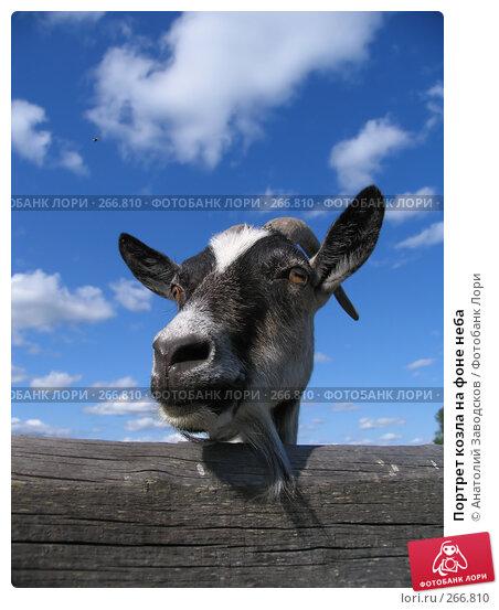 Портрет козла на фоне неба, фото № 266810, снято 4 августа 2006 г. (c) Анатолий Заводсков / Фотобанк Лори
