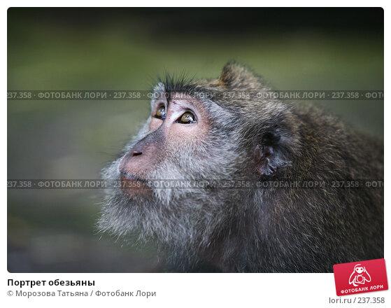 Портрет обезьяны, фото № 237358, снято 24 февраля 2008 г. (c) Морозова Татьяна / Фотобанк Лори