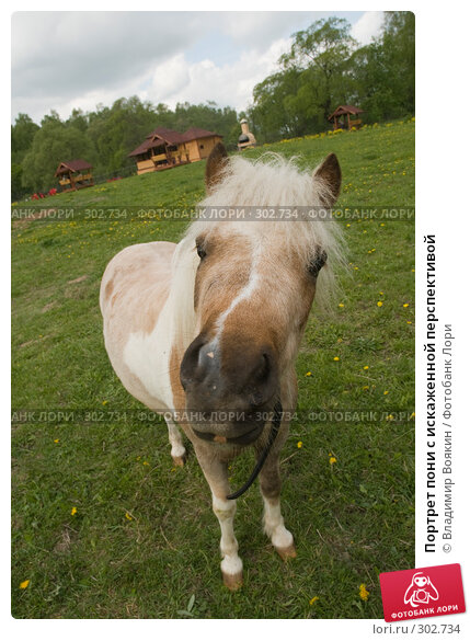 Портрет пони с искаженной перспективой, фото № 302734, снято 17 мая 2008 г. (c) Владимир Воякин / Фотобанк Лори