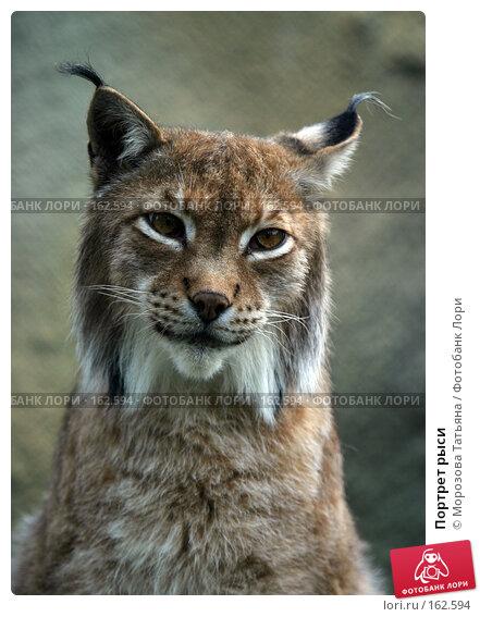 Купить «Портрет рыси», фото № 162594, снято 14 июня 2004 г. (c) Морозова Татьяна / Фотобанк Лори