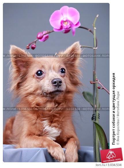 Купить «Портрет собаки и цветущая орхидея», эксклюзивное фото № 3034534, снято 20 мая 2019 г. (c) Яна Королёва / Фотобанк Лори