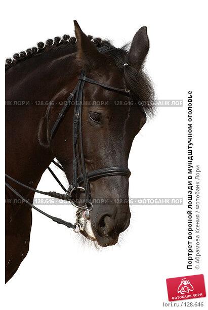 Портрет вороной лошади в мундштучном оголовье, фото № 128646, снято 12 августа 2006 г. (c) Абрамова Ксения / Фотобанк Лори