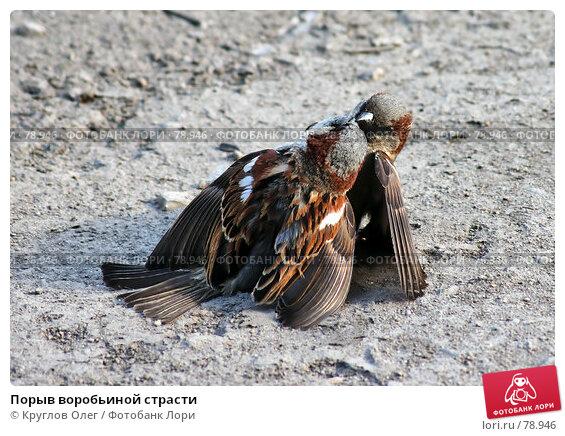 Порыв воробьиной страсти, эксклюзивное фото № 78946, снято 13 мая 2007 г. (c) Круглов Олег / Фотобанк Лори