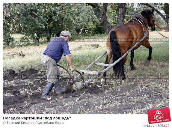 """Купить «Посадка картошки """"под лошадь""""», фото № 1805622, снято 23 августа 2008 г. (c) Евгений Киселев / Фотобанк Лори"""