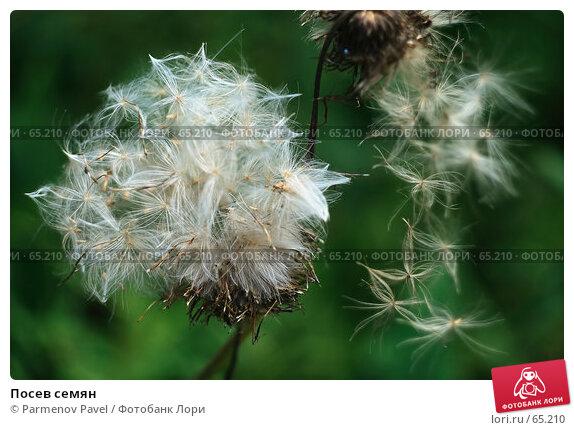 Посев семян, фото № 65210, снято 21 июля 2007 г. (c) Parmenov Pavel / Фотобанк Лори