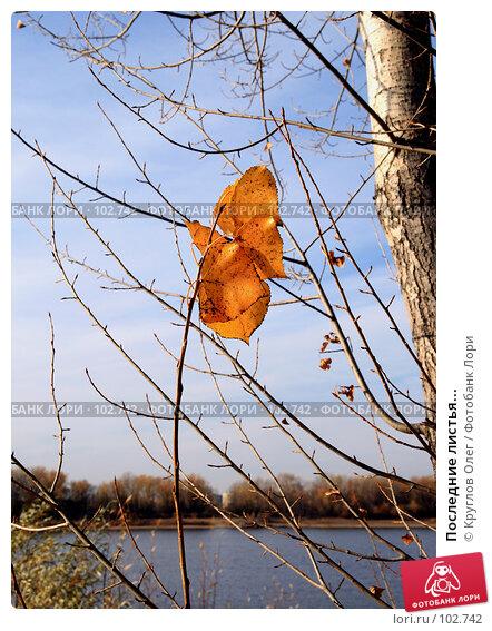 Последние листья..., фото № 102742, снято 19 августа 2017 г. (c) Круглов Олег / Фотобанк Лори