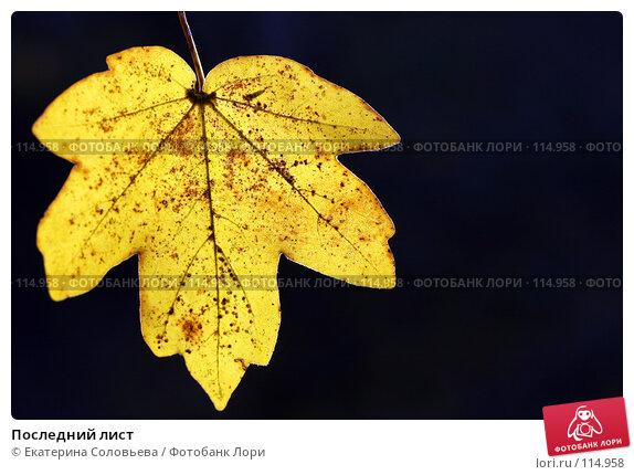 Купить «Последний лист», фото № 114958, снято 11 ноября 2007 г. (c) Екатерина Соловьева / Фотобанк Лори