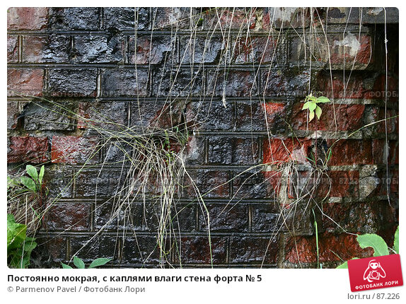 Постоянно мокрая, с каплями влаги стена форта № 5, фото № 87226, снято 7 сентября 2007 г. (c) Parmenov Pavel / Фотобанк Лори