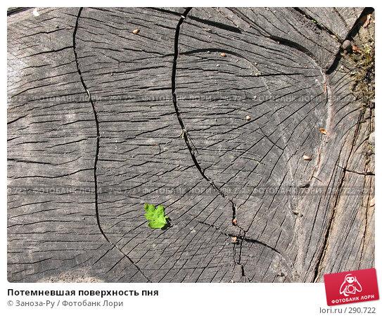 Потемневшая поверхность пня, фото № 290722, снято 17 мая 2008 г. (c) Заноза-Ру / Фотобанк Лори