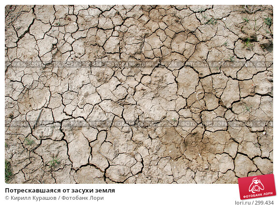 Купить «Потрескавшаяся от засухи земля», фото № 299434, снято 3 мая 2008 г. (c) Кирилл Курашов / Фотобанк Лори