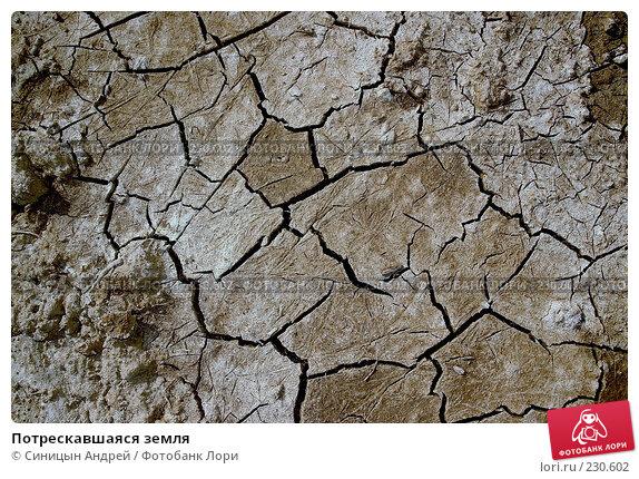 Потрескавшаяся земля, фото № 230602, снято 25 марта 2007 г. (c) Синицын Андрей / Фотобанк Лори