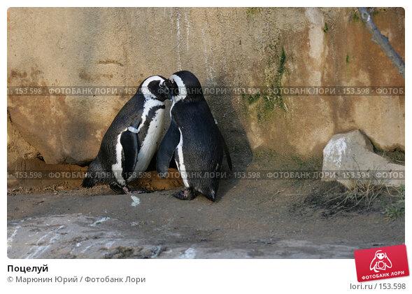 Поцелуй, фото № 153598, снято 10 декабря 2007 г. (c) Марюнин Юрий / Фотобанк Лори
