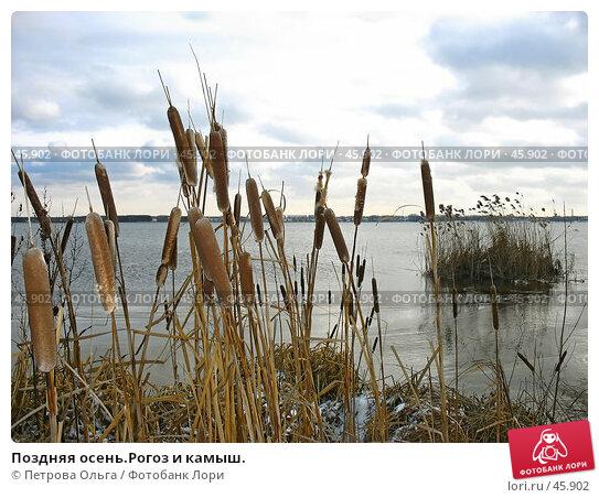 Поздняя осень.Рогоз и камыш., фото № 45902, снято 27 января 2007 г. (c) Петрова Ольга / Фотобанк Лори