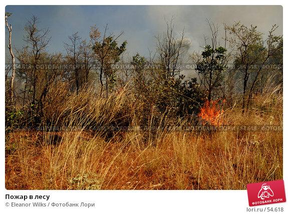 Купить «Пожар в лесу», фото № 54618, снято 3 июля 2007 г. (c) Eleanor Wilks / Фотобанк Лори