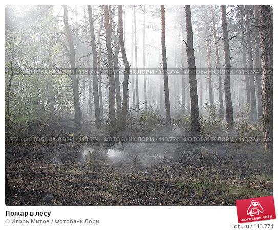 Пожар в лесу, фото № 113774, снято 6 мая 2007 г. (c) Игорь Митов / Фотобанк Лори