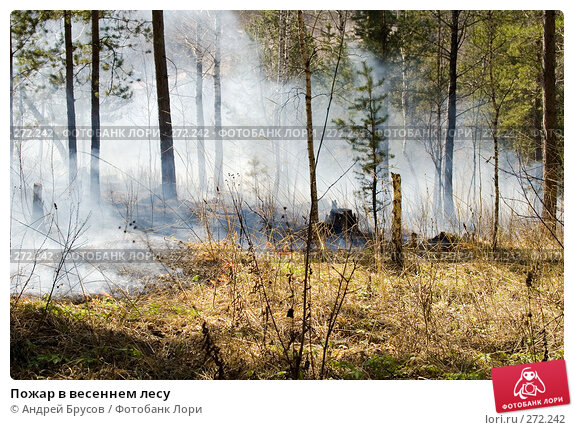 Пожар в весеннем лесу, фото № 272242, снято 29 апреля 2008 г. (c) Андрей Брусов / Фотобанк Лори