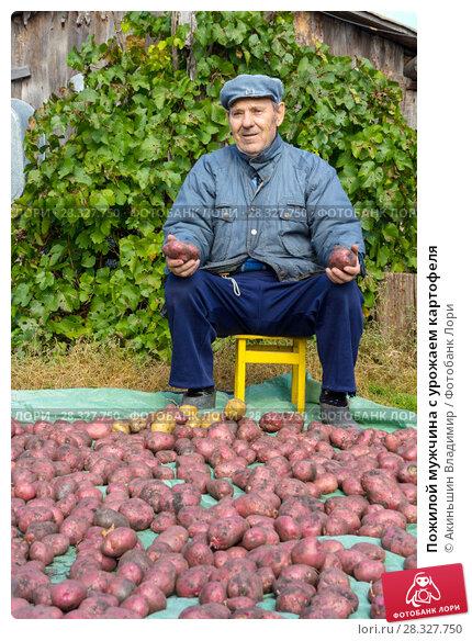 Купить «Пожилой мужчина с урожаем картофеля», фото № 28327750, снято 23 сентября 2011 г. (c) Акиньшин Владимир / Фотобанк Лори