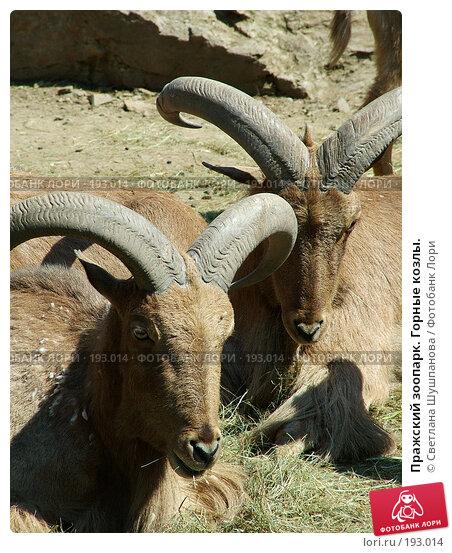 Купить «Пражский зоопарк. Горные козлы.», фото № 193014, снято 9 мая 2006 г. (c) Светлана Шушпанова / Фотобанк Лори