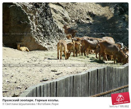 Пражский зоопарк. Горные козлы., фото № 195002, снято 9 мая 2006 г. (c) Светлана Шушпанова / Фотобанк Лори
