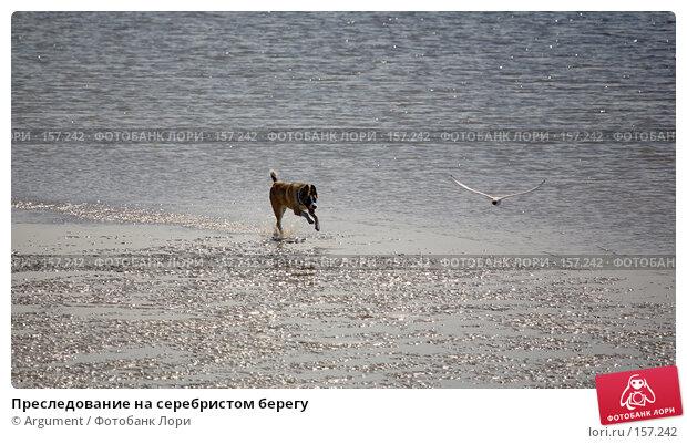 Преследование на серебристом берегу, фото № 157242, снято 1 июня 2007 г. (c) Argument / Фотобанк Лори