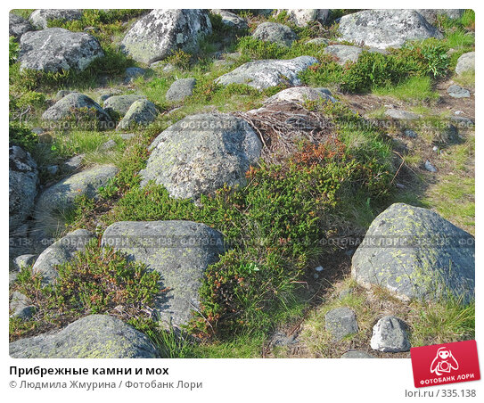 Прибрежные камни и мох, фото № 335138, снято 20 июня 2008 г. (c) Людмила Жмурина / Фотобанк Лори