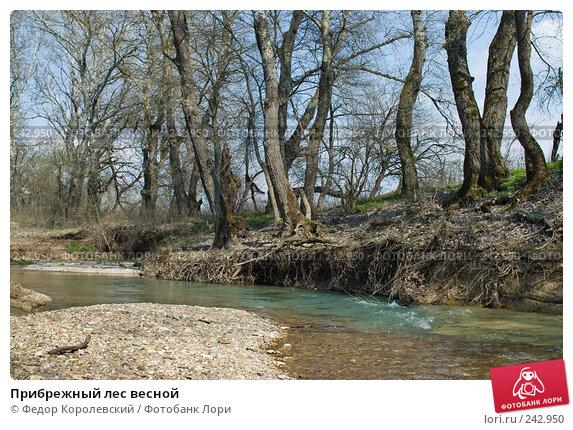 Прибрежный лес весной, фото № 242950, снято 4 апреля 2008 г. (c) Федор Королевский / Фотобанк Лори