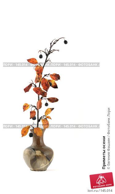 Приметы осени, фото № 145014, снято 26 октября 2007 г. (c) Евгения Фашаян / Фотобанк Лори