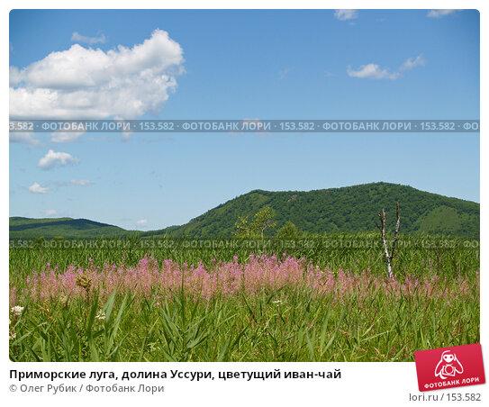 Приморские луга, долина Уссури, цветущий иван-чай, фото № 153582, снято 22 июля 2007 г. (c) Олег Рубик / Фотобанк Лори