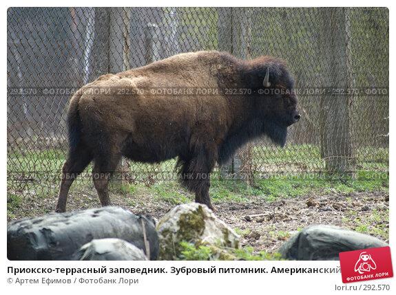 Приокско-террасный заповедник. Зубровый питомник. Американский бизон, фото № 292570, снято 13 апреля 2008 г. (c) Артем Ефимов / Фотобанк Лори