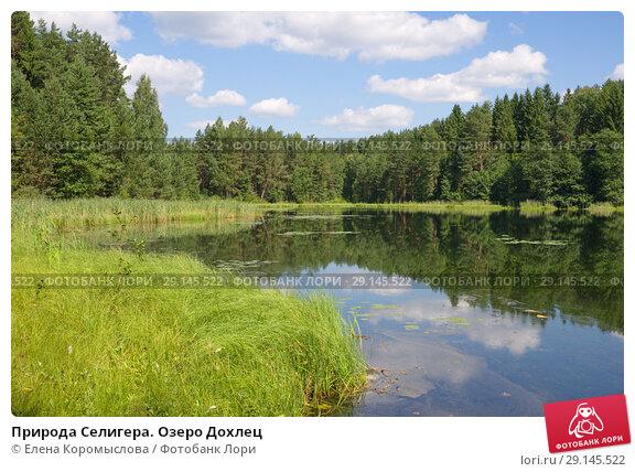 Купить «Природа Селигера. Озеро Дохлец», фото № 29145522, снято 2 августа 2018 г. (c) Елена Коромыслова / Фотобанк Лори