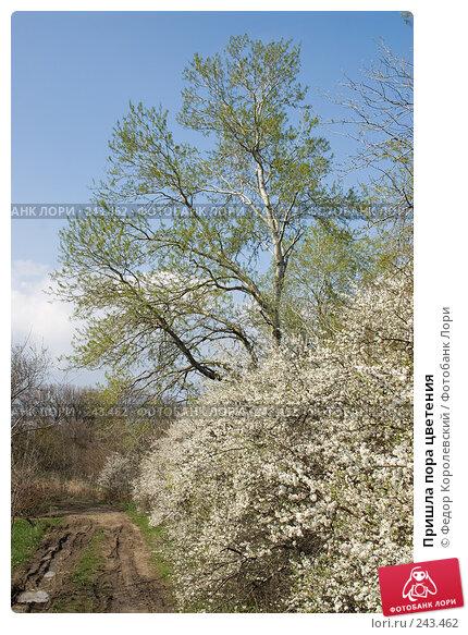 Купить «Пришла пора цветения», фото № 243462, снято 4 апреля 2008 г. (c) Федор Королевский / Фотобанк Лори