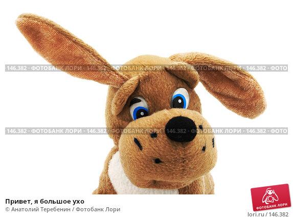 Привет, я большое ухо, фото № 146382, снято 8 декабря 2007 г. (c) Анатолий Теребенин / Фотобанк Лори