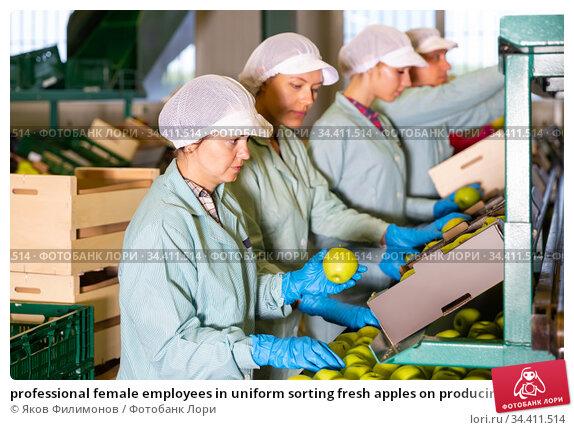 professional female employees in uniform sorting fresh apples on producing grading line. Стоковое фото, фотограф Яков Филимонов / Фотобанк Лори