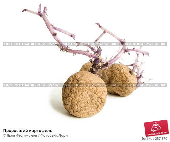 Купить «Проросший картофель», фото № 257870, снято 12 апреля 2008 г. (c) Яков Филимонов / Фотобанк Лори