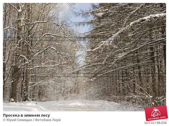 Просека в зимнем лесу, фото № 98034, снято 17 февраля 2007 г. (c) Юрий Синицын / Фотобанк Лори