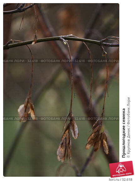 Прошлогодние семена, фото № 32618, снято 14 марта 2007 г. (c) Крупнов Денис / Фотобанк Лори