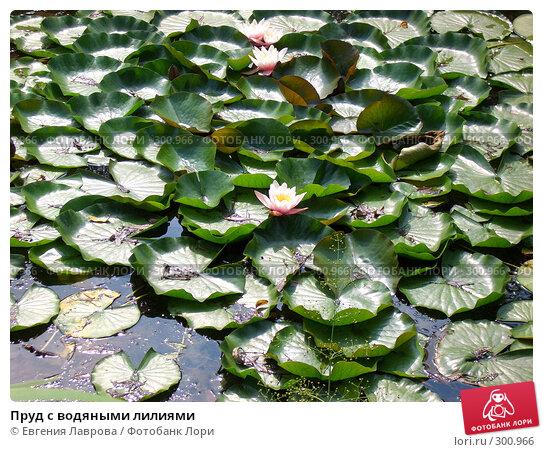 Пруд с водяными лилиями, фото № 300966, снято 13 августа 2005 г. (c) Евгения Лаврова / Фотобанк Лори
