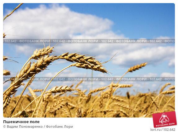 Пшеничное поле, фото № 102642, снято 22 октября 2016 г. (c) Вадим Пономаренко / Фотобанк Лори