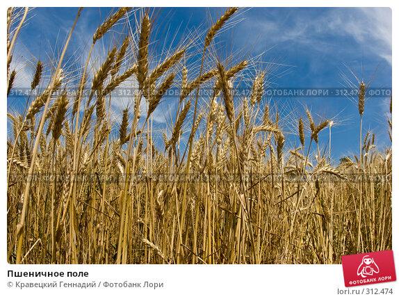 Пшеничное поле, фото № 312474, снято 2 июля 2005 г. (c) Кравецкий Геннадий / Фотобанк Лори