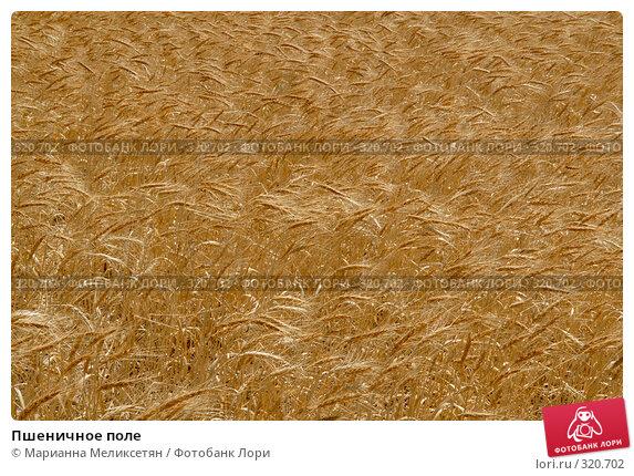 Пшеничное поле, фото № 320702, снято 28 июля 2007 г. (c) Марианна Меликсетян / Фотобанк Лори