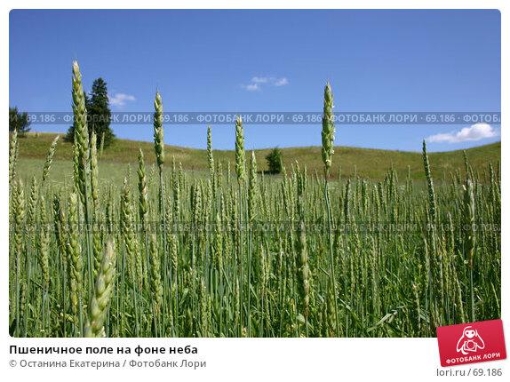 Пшеничное поле на фоне неба, фото № 69186, снято 9 июля 2006 г. (c) Останина Екатерина / Фотобанк Лори